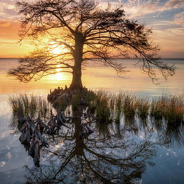 Outer Banks North Carolina Cypress Tree Sunset Landscape OBX Duck NC by Dave Allen