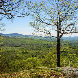 Overlook Center Hill by Alana Ranney