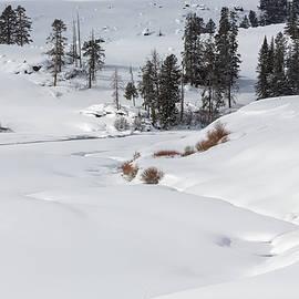 Overnight Snowfall by Ann Skelton