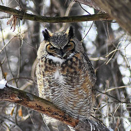 Owl Be Home For Christmas by Cheryle Gannaway