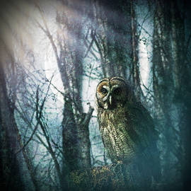 Owl in the Forest in the Glow of the Moon by Debra and Dave Vanderlaan