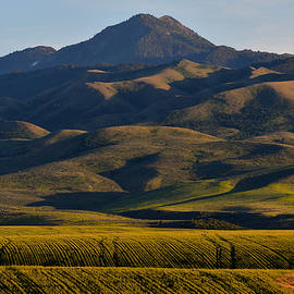 Oxford Peak In Afternoon Shadows by Michael Morse
