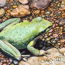 Pacific Tree Frog by Becky Miller