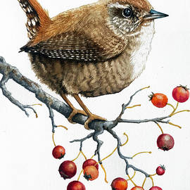 Pacific Wren by Linda Apple