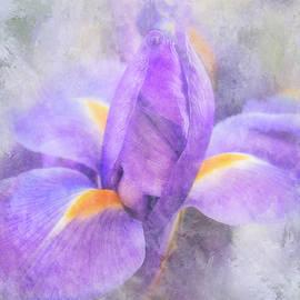 Painted Iris Bud by Teresa Wilson