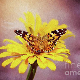 Painted Lady Butterfly by Sharon McConnell