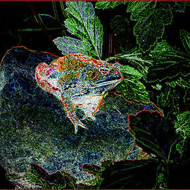 Painted Toad by Constance Lowery