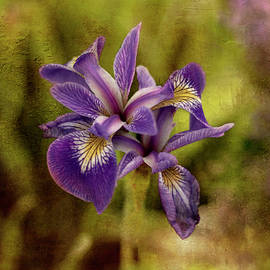 Painterly effect shades in a field of Iris  by Rita Di Lalla