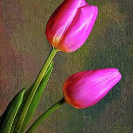 Pair of Lavender Tulips by Tom Mc Nemar