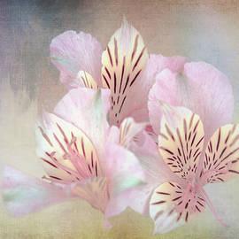 Pale Alstroemeria by Terry Davis