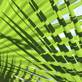 Palm Leaves Pattern by David T Wilkinson