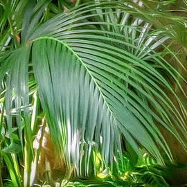 Palm Frond by Susan Hope Finley
