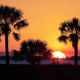 Palm Sunset by Bill Chambers