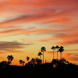 Palm Sunset by Bonnie See