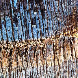 Palm Tree Blues  by Joy Watson