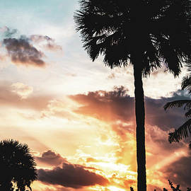 Palm Tree Silhouettes and Sunset Coastal Nature / Landscape Photo by Melissa Fague