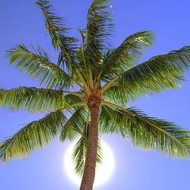 Palm Tree Sun by Patti Deters
