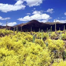 Palo Verde Spring by Douglas Taylor