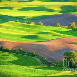 Palouse Fields by Inge Johnsson