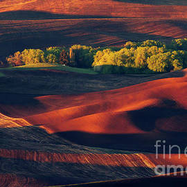 Palouse In Spring L-P 035 by Wei Tang