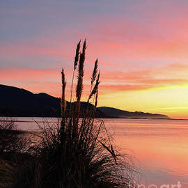 Pampas Grass Sunset - Netarts Bay - Oregon by Beautiful Oregon