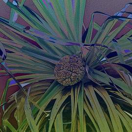 Pandanus Palm and Sky by Joan Stratton