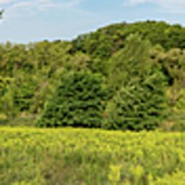 Panorama of Green Meadow by Helen Filatova