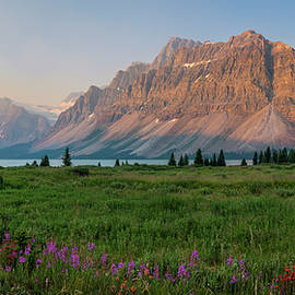 Panoramic View of Bow Lake During Sunrise with Wildflowers in Full Bloom. by Yves Gagnon