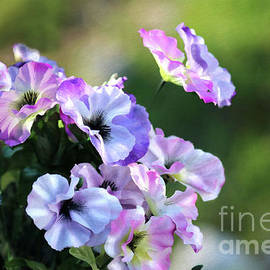 Pansies in May by Sandra Huston