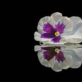 Pansy by Sandi Kroll