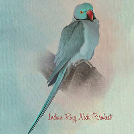 Parakeet Indian Ring Neck - Blue Morph by Patti Deters
