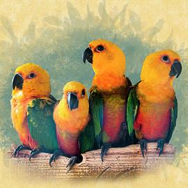 Parakeet Sun Conures - Four Friends by Patti Deters