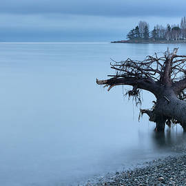 Parksville Bay Blue Hour by Randy Hall