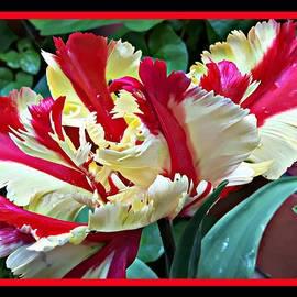 Parrot Tulip by Somila Chakraborty