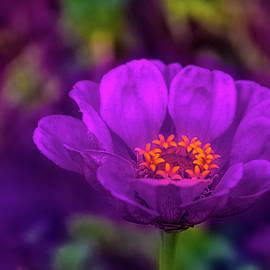 Passionate Purple by David Beard