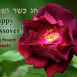 Passover Rose by Brian Tada