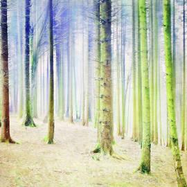 Pastel Birches by Terry Davis