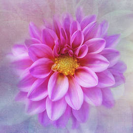 Pastel Dahlia Delight by Terry Davis