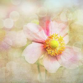 Pastel Flower Beauty by Terry Davis