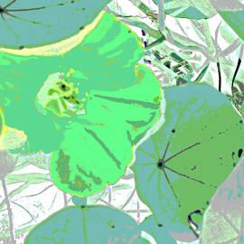 Pastel Garden by Ian  MacDonald
