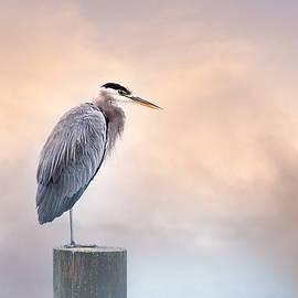 A Peaceful Pause by Joy McAdams