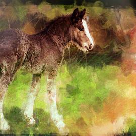 Pasture Pony by Jim Love