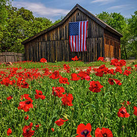 Patriotic Poppies by Lynn Bauer