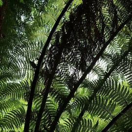 Patterns of the Fronds by Michaela Perryman