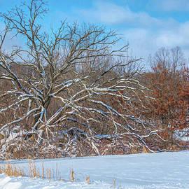 Paulson Road Winter by Trey Foerster