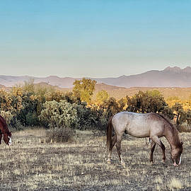 Peaceful  pasture  by Barbara Zahno