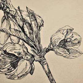 Peach Blossoms in Pen and Ink by Renu S