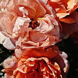 Peach Rose Bunch Portrait by Gaby Ethington