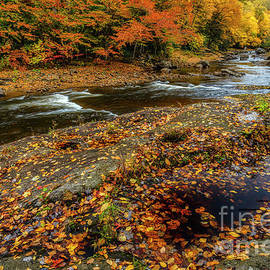 Peak Color on Williams River by Thomas R Fletcher