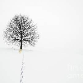 Pee Tree
